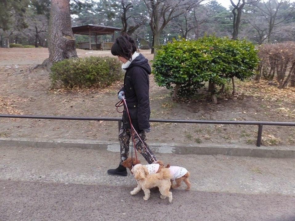 外回り敷島公園 3頭引き