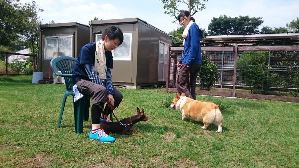 ミニピンのクーちゃん犬の誘惑訓練!!