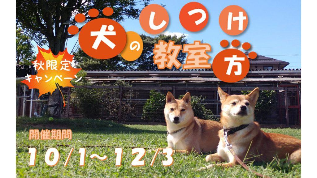 秋限定キャンペーン